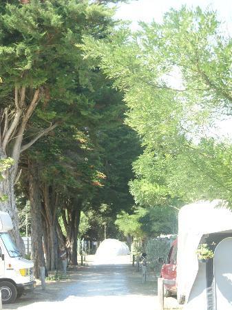 Camping Le Puma : alléef