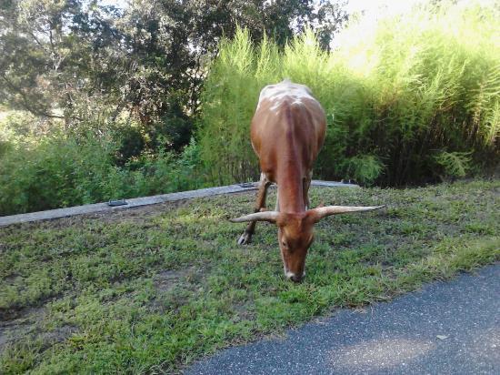 Jacksonville-Baldwin Rail Trail: Wild Life?