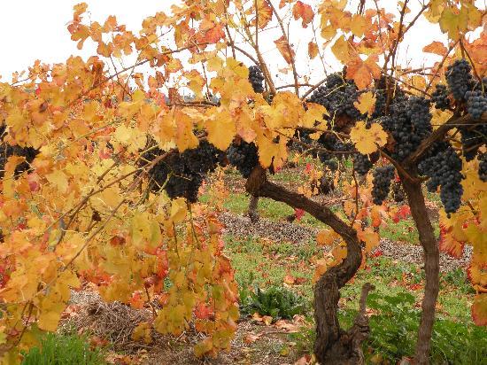 Pindarie Winery: B'rossafoodie