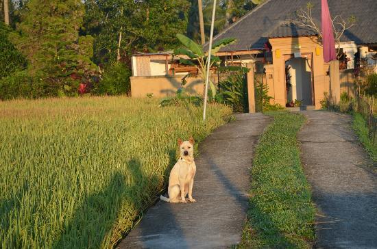 Sang Fajar: お迎えしてくれる犬