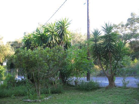 Marilena Apartments & Studios: garden
