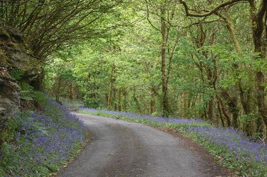 The Old Mill Soar: local walks through bluebell woods