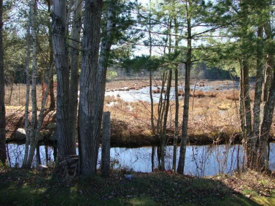On Cranberry Pond Bed and Breakfast: Morning on the bogs