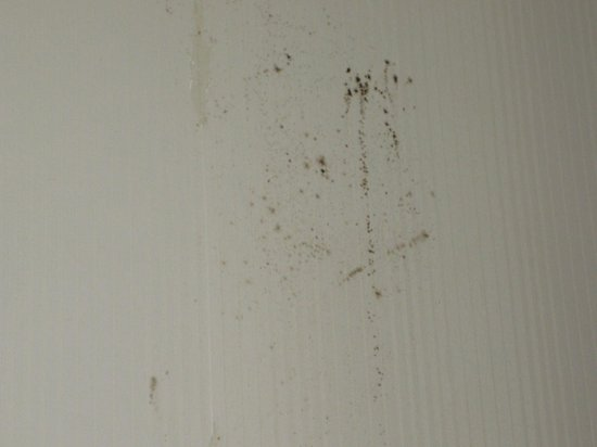 Days Inn & Suites Murfreesboro: Mold on bathroom wall