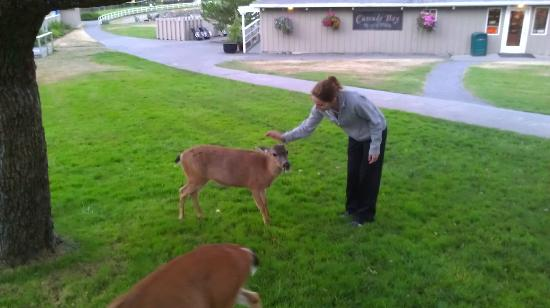 Rosario Resort and Spa: If you have apples, the deer are your best friend
