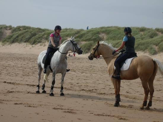 Balmedie Beach : A couple of beautiful horses