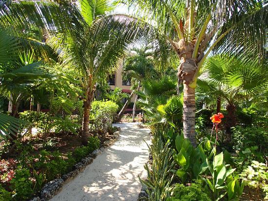 ناوتي بيتش كوندوز: Garden