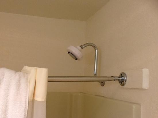 Quality Inn and Suites Capitola By the Sea: shower head