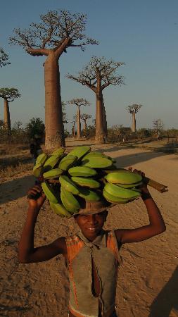 Avenue of the Baobabs: Baobab Avenue Morondava Madagascar