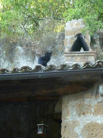 Antico Molino: ...il gatto sul tetto...