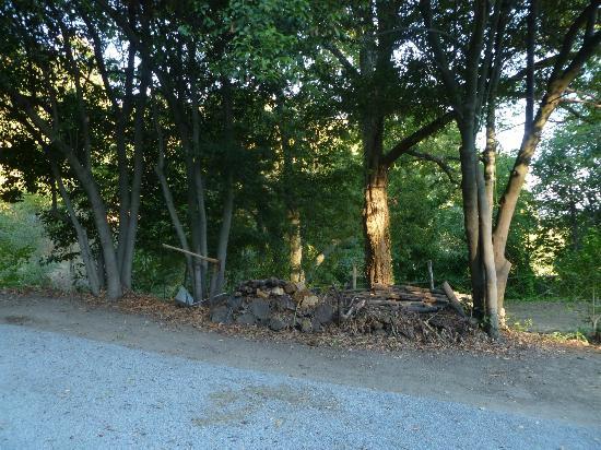 Antico Molino: angoletto di bosco adiacente
