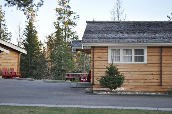 Jasper House Bungalows: friendly Grizzly bear