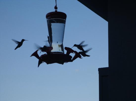 Grand Rivers Inn : Hummingbirds