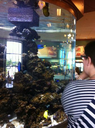 Kelly's Roast Beef: tropical fish tank in center of restaurant