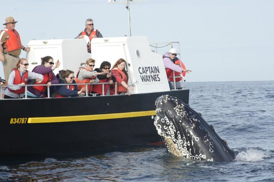 Bay Bulls, Canada: Marina Whitten photo of spyhopping Humpback