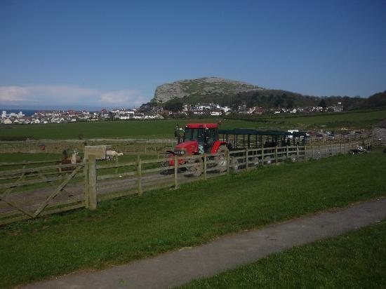 Bodafon Farm Park: View of the Little Orme from the farm.