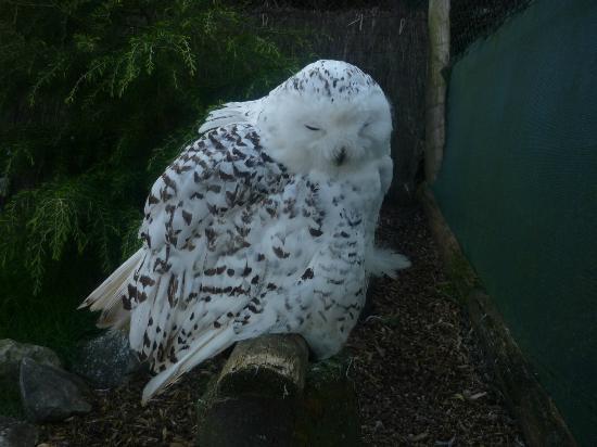 Bodafon Farm Park: Owl.