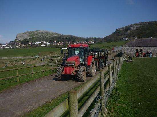Bodafon Farm Park: Tractor!