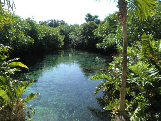 Bel Air Collection Xpu Ha Riviera Maya: Cenote in the hotel