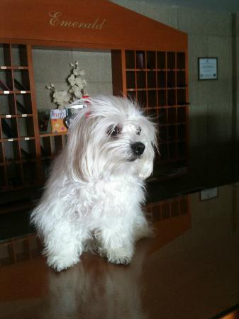 Emerald Hotel: maria's gorgeous dog