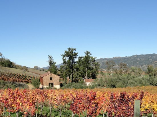 Da Vine Wine Tours: Picture yourself here...