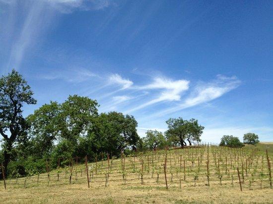Da Vine Wine Tours: Beautiful vineyard views in Northern Sonoma