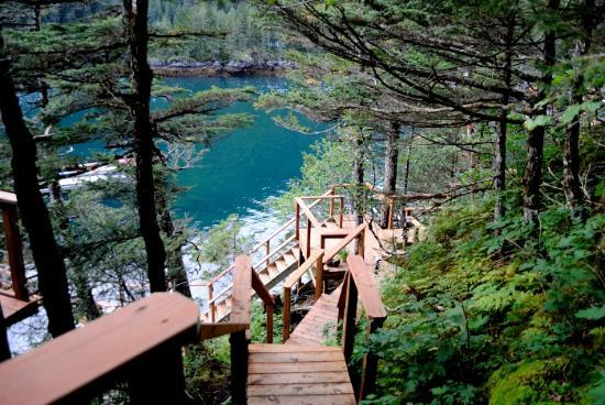 Orca Island Cabins: view from Stellar Jay cabin
