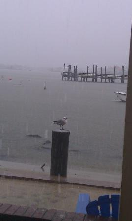 Oceanic Motel: View from my doorway of room on bay side. Fishing pier is across water