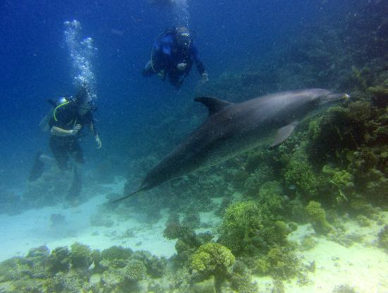 Scuba Hurghada Diving Center: Diving with dolphins! - Scuba Hurghada