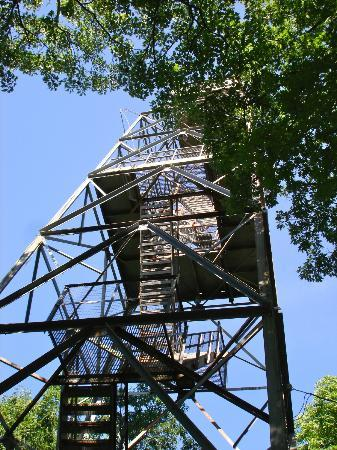 Dorset Scenic Lookout Tower: Looking Up