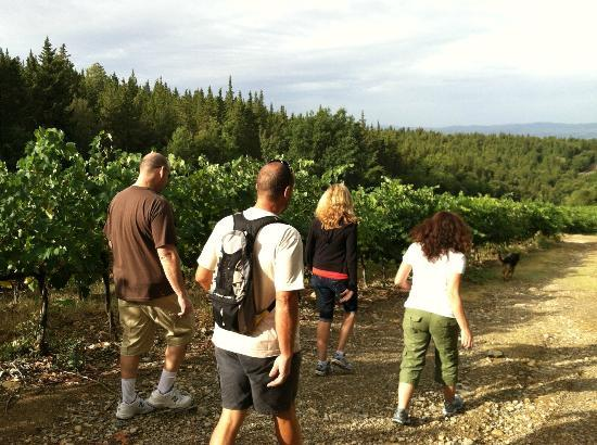 Antico Podere Marciano: wine trek with Maurizio