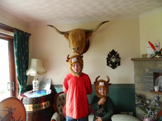 "Drumbuie Farm: Our two ""highland coos"" with Caroline's Matilda"