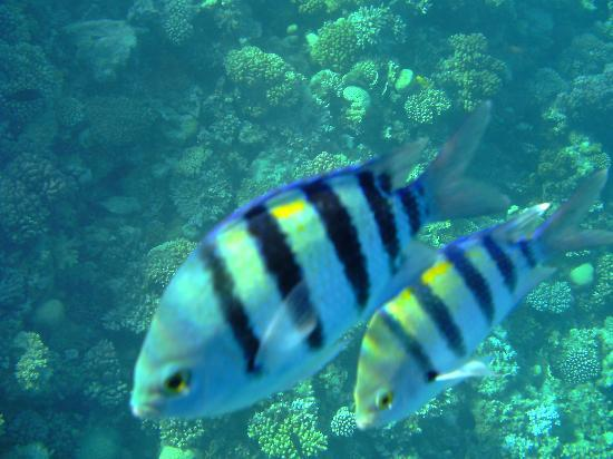 Coral Reefs: shoal of fish