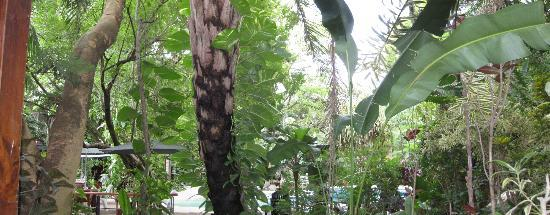 Playa Hermosa Bosque del Mar Hotel: View from our ground floor garden's deck