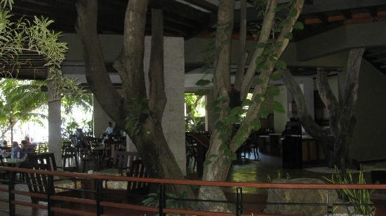 Hotel Bosque del Mar Playa Hermosa: Tree growing right through the lobby