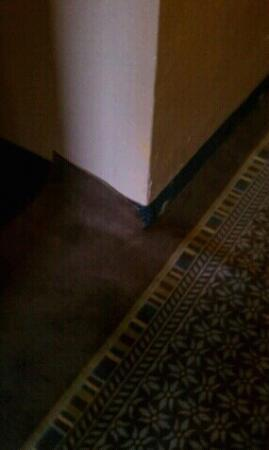 Motel 6 Melrose Park, IL: uneven and uncut carpet in hallway