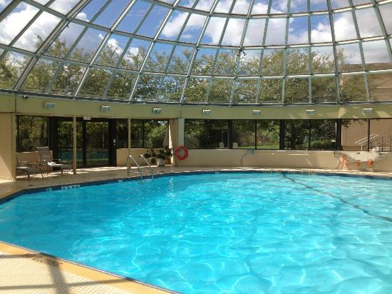 Sheraton Toronto Airport Hotel & Conference Centre: Nice pool
