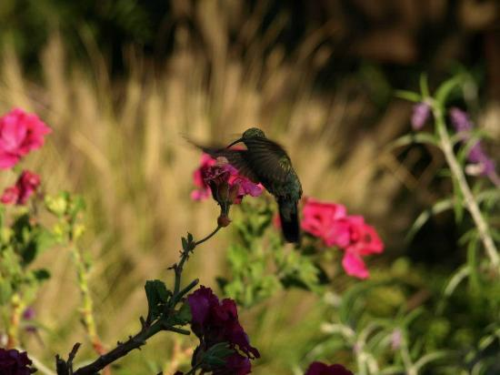 Casa Colibri eco-Lodge: a hummingbird in the gardens