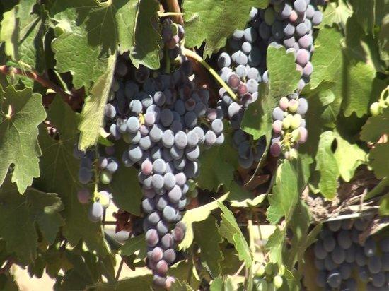 Rio Seco Winery