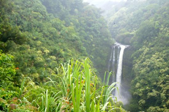 Skyline Eco Adventures - Akaka Falls: We zipped over this waterfall!