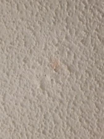 Travelodge Pensacola Beach: spots all over ceiling