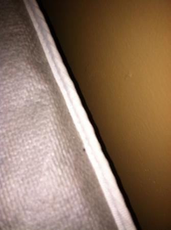 Rodeway Inn South: bad pic but it's a bed bug