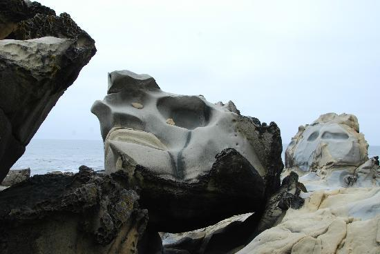 Natures sculptures at Salt Point State Park