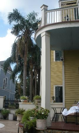 HH Whitney House on the Historic Esplanade: Large palm trees, orange trees, banana trees to enjoy.