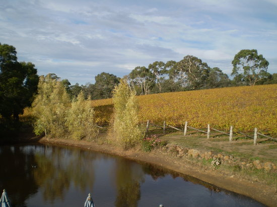 Gisborne, Australien: The vineyard in Autumn