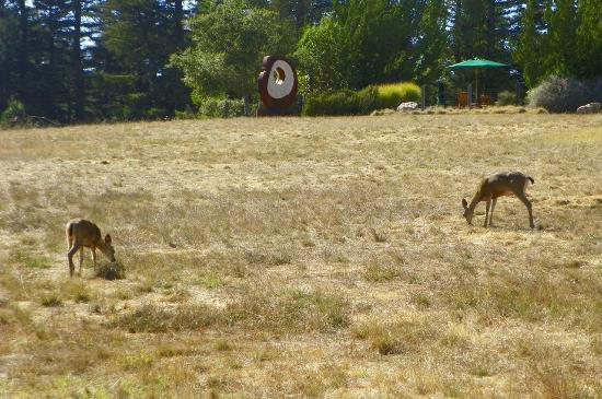 Post Ranch Inn: deer grazing near the pool