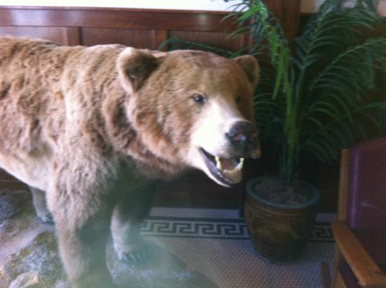 Ender's Cafe and Hotel: Bear in the hotel lobby