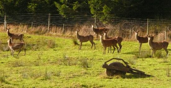 The Natural Flames Experience - Day Tours: Venison onlookers