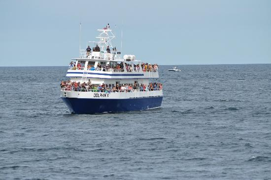 ‪‪Hyannis Whale Watcher Cruises‬: This is what you sail on...‬