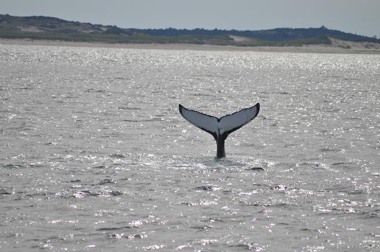 Hyannis Whale Watcher Cruises: Classic or what!
